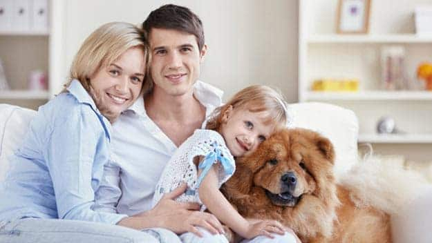 Wills & Trusts dog-young-family Direct Wills Bordesley